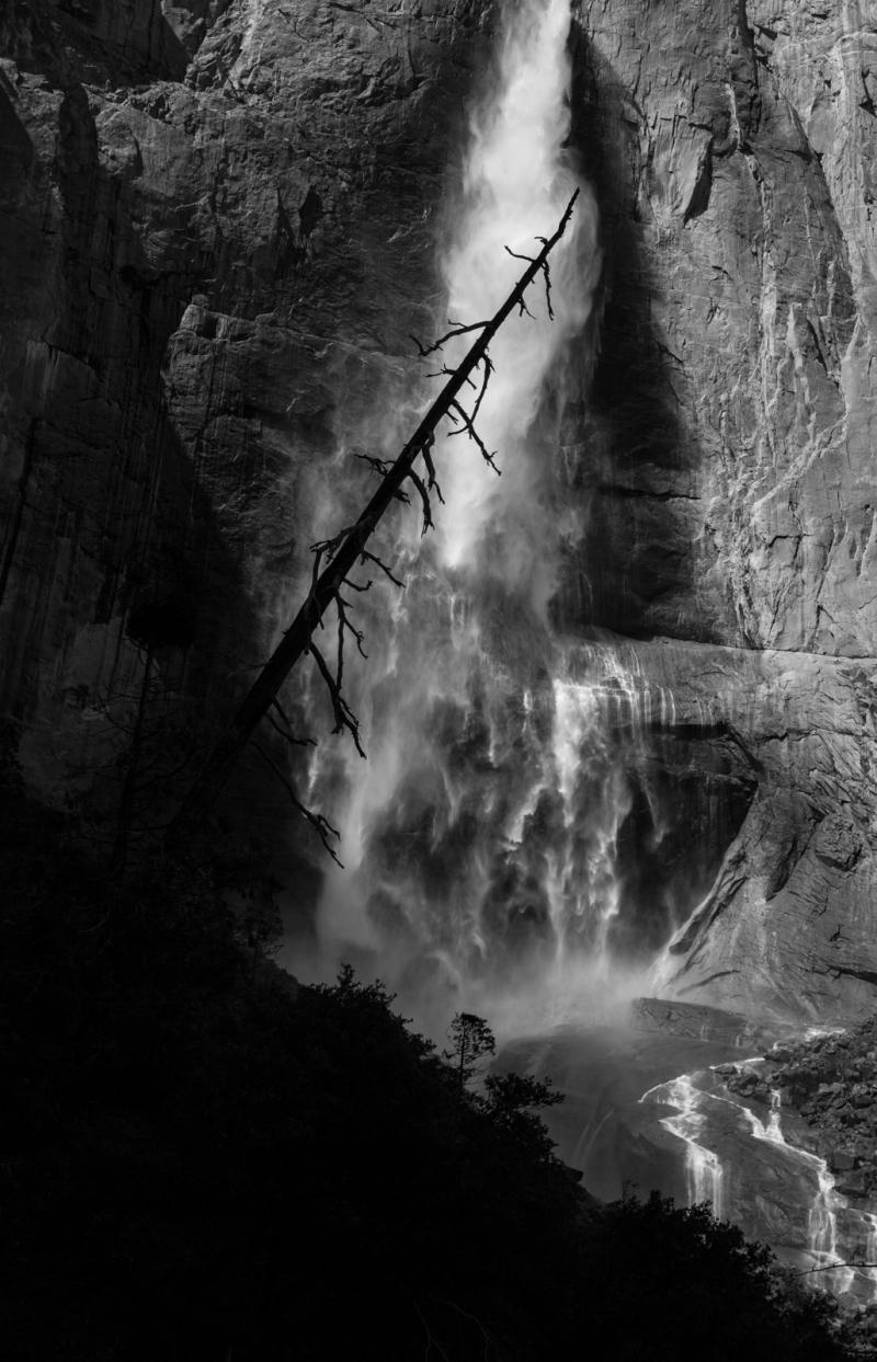 Yosemite (Tree) Falls